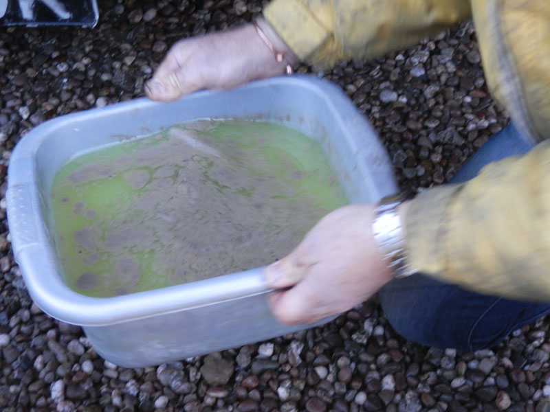 ferrari 365 restoration oil & water mix